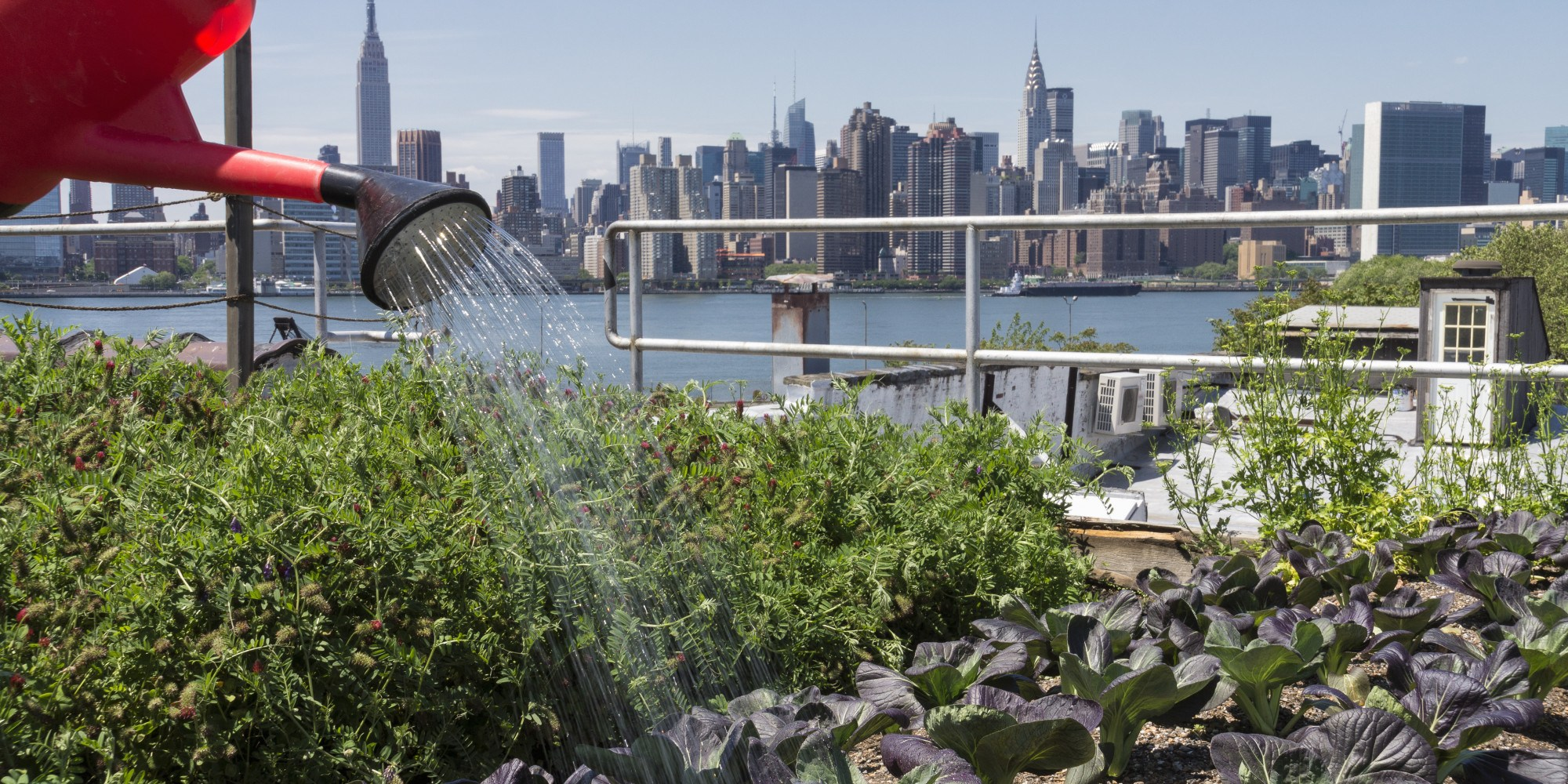 What Is Urban Farming?